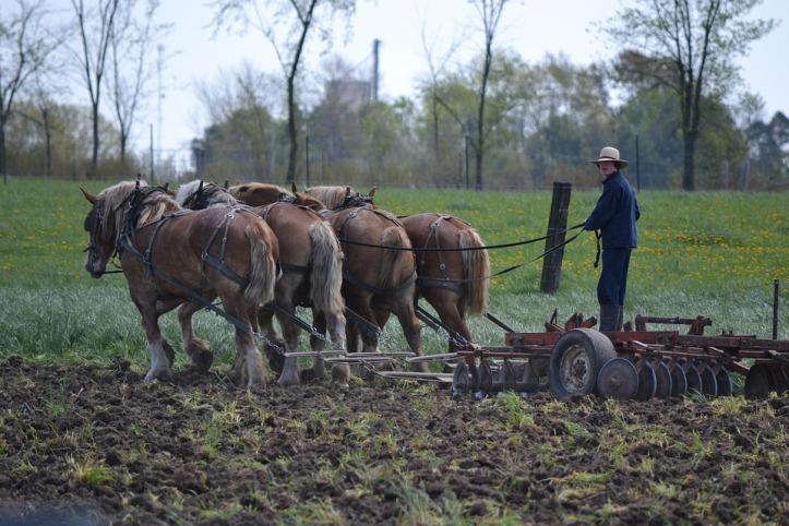 horses-1963274_960_720